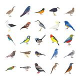 Birds Flat Vector Icons Set royalty free illustration