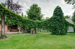 Aristolochia Royalty Free Stock Image