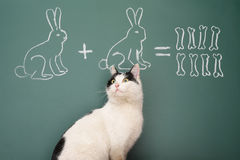 Arithmetic. Education idea joke about dreamy cat studying arithmetic Royalty Free Stock Image