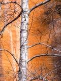 Arizon Canyon Colors Stock Images