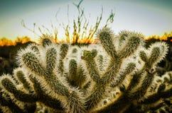 Arizona öken Royaltyfri Bild