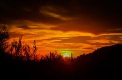 Arizona öken Arkivbilder