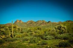 Arizona öken arkivfoto