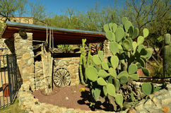 Arizona öken Arkivfoton