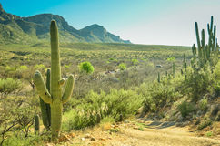 Arizona öken Arkivbild