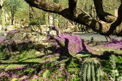 Arizona öken Royaltyfri Foto