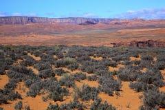 arizona öken målad sagebrush arkivfoton