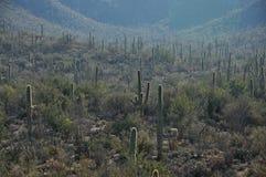 Arizona ökendal Arkivbild