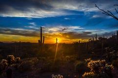 Arizona ökensolnedgång Royaltyfri Foto