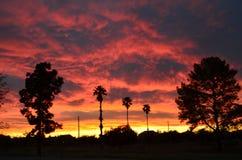 Arizona ökensolnedgång Arkivbild