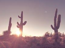 Arizona ökensoluppgång, saguarokaktusträd arkivbild