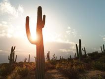 Free Arizona Stock Photos - 6199913