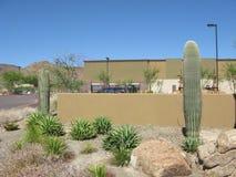 Arizona Backyard Stock Image