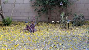 Arizona Backyard in Spring Royalty Free Stock Photography