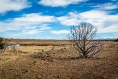 Arizona bagna i zwierzęca riparian prezerwa fotografia royalty free