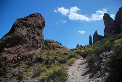 Arizona cactus. Superstition mountains in Arizona, along the path towards the top on a sunny day stock image