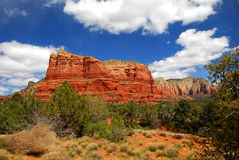 Arizona cactus. Sedona, Arizona on a beautiful summer day. Blue sky and red rock all around us stock photography