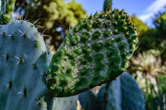 Arizona Cactus Garden Royalty Free Stock Photos