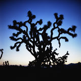 Arizona. Cactus at sunset in a desert in Arizona Stock Photo