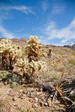 Arizona cactus trees. Arizona desert along the Route 66 Stock Image