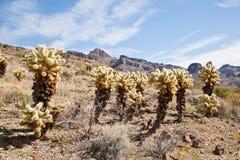 Arizona cactus trees. Arizona desert along the Route 66 Stock Photos