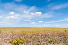 Arizona countryside field yellow rabbit brush flower blue sky wi Stock Photography