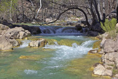 Arizona creek Royalty Free Stock Images