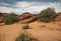 Arizona Desert. This is a picture of the desert in Northern Arizona royalty free stock photography