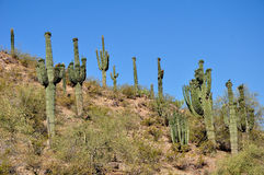 Arizona desert Royalty Free Stock Image