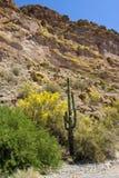 Arizona Desert stock image