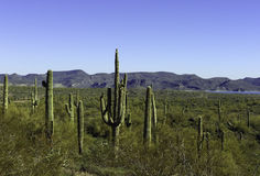 Free Arizona Desert Stock Photos - 9877953