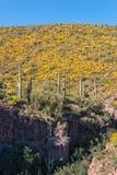Arizona Desert Blooming in Spring Stock Photography