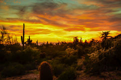 Arizona Desert. Breathtaking sunset in the in Sonoran Desert Stock Images