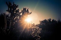 Arizona desert cactus boulder landscape. Desert cactus landscape with dramatic sunrise royalty free stock image