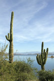Arizona Desert Cactus and Lake stock photography