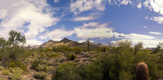 Arizona desert cactus and mountains landscape royalty free stock images