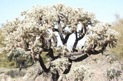 Arizona desert cactus tree Stock Photo