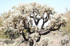 Arizona desert cactus tree. With flowers Stock Photo