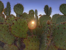 Arizona desert cactus tree landscape. With dramatic sky and morning sunrise peaking through prickly pear cactus royalty free stock photography