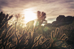Arizona desert cactus tree landscape. With morning sunrise Royalty Free Stock Image