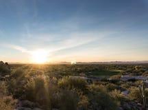 Arizona desert cactus tree landscape. With morning sunrise royalty free stock image