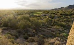 Arizona desert cactus tree landscape. With morning sunrise stock photography