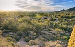 Arizona desert cactus tree landscape. With morning sunrise royalty free stock photo