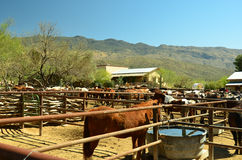 Arizona Desert. Dude Ranch near Saguarro National Park East in Tucson Royalty Free Stock Photography