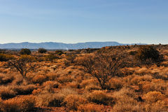 Arizona desert landscape Stock Photography