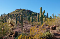 Arizona Desert Landscape Stock Image