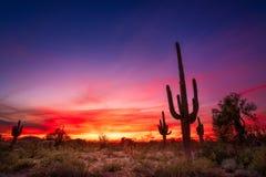 Free Arizona Desert Landscape At Sunset Royalty Free Stock Images - 171831439