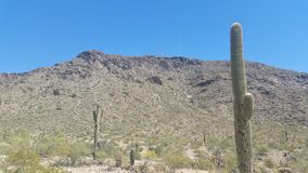 Arizona Desert Landscape. With blue sky& x27;s and cactus royalty free stock image