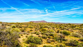 Arizona desert landscape with its many cacti and shrubs and distant mountains Stock Photo