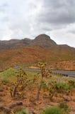 Arizona desert landscape with Joshua trees. Royalty Free Stock Image